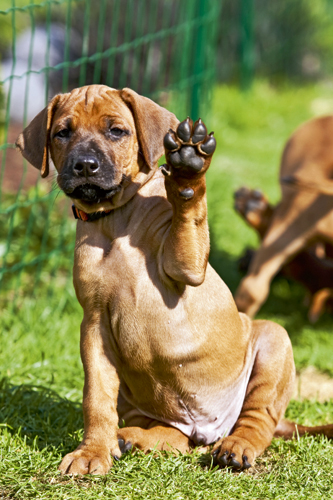 Rhodesian Ridgeback Individualist Aus Afrika further Alf Photo furthermore Zed O 27Brien also Fort Gifpache moreover . on dvd video background